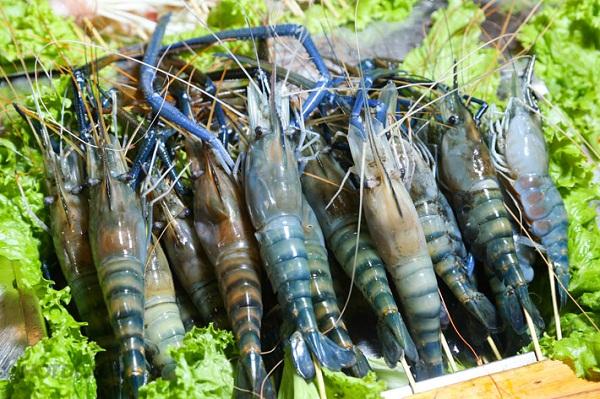 Phân biệt các loại tôm phổ biến tại Việt Nam